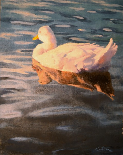 White Duck at Sunset
